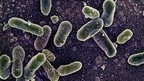 Salmonella 'from single egg source'