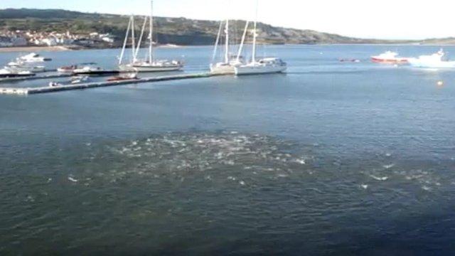 Whitebait jumping off Lyme Regis