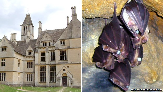 Woodchester Mansion and its colony of greater horseshoe bats