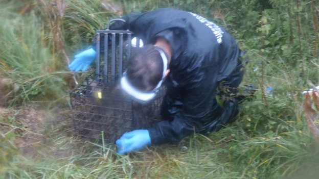 Uckfield badger vaccination
