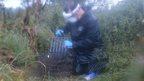 Uckfield badger vaccination