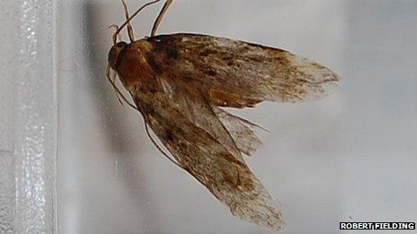 Moth stuck in Robert Fielding's ear