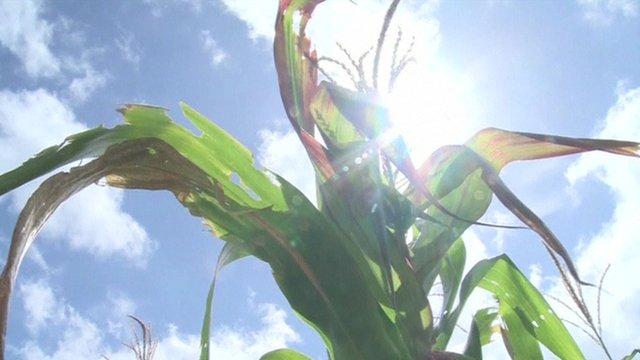 Guatemala drought