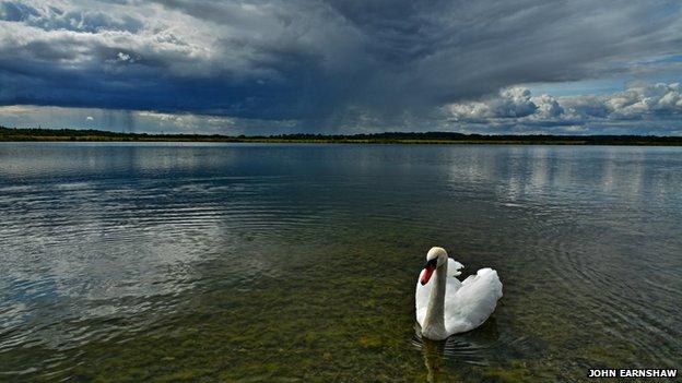 Swan at RSPB reserve