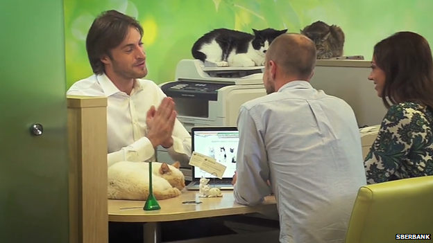 Customers select a cat in a Sberbank promotional video