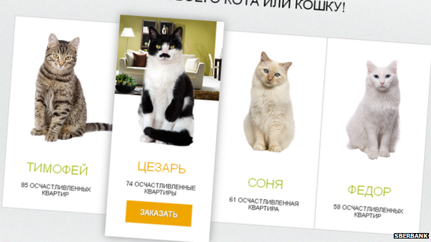 A screengrab showing cats on the Sberbank website