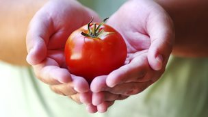 Tomatoes are rich in the anti-oxidant lycopene
