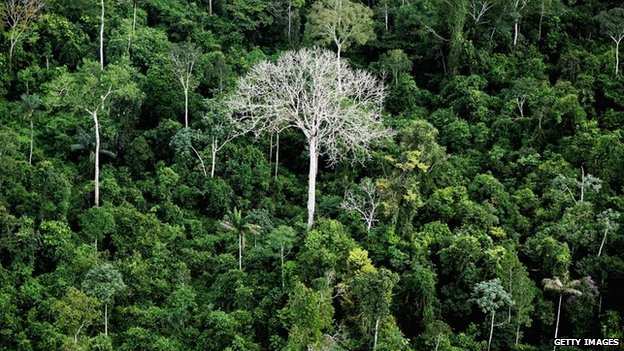 The Amazon rainforest on June 15, 2012, near Altamira, Brazil.