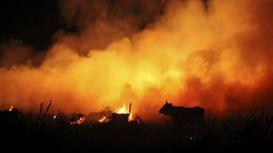 A cow is silhouetted against flames during a forest fire in Cadiz province, Spain, 28 August 2014
