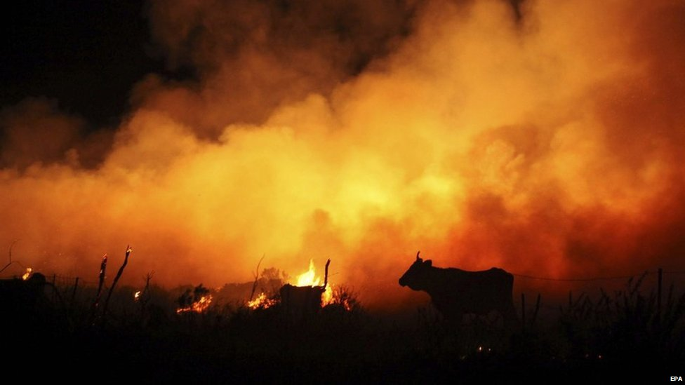 A cow is silhouetted against flames during a forest fire in Cadiz province, Spain