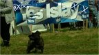 "Dog standing in front of a banner saying ""Yes Islay"""