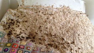 Giant wasp nest on a bed