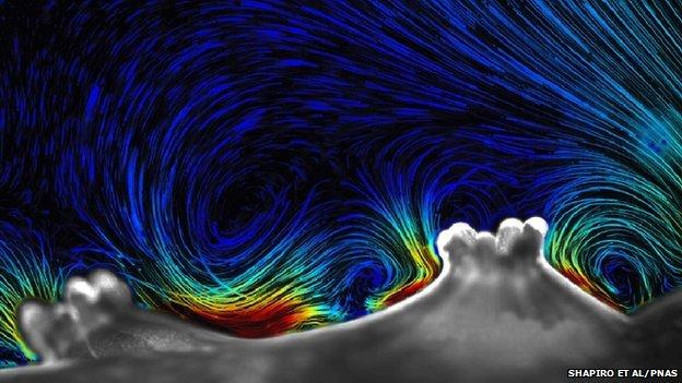 Tracer particles show the flow of water around coral (c) Orr H. Shapiro, Vicente I. Fernandez, Melissa S. Garren, Jeffrey S. Guasto, François P. Debaillon-Vesque, Esti Kramarski-Winter, Assaf Vardi, Roman Stocker, PNAS, 2014