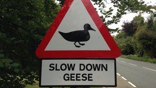 Beyton geese road sign