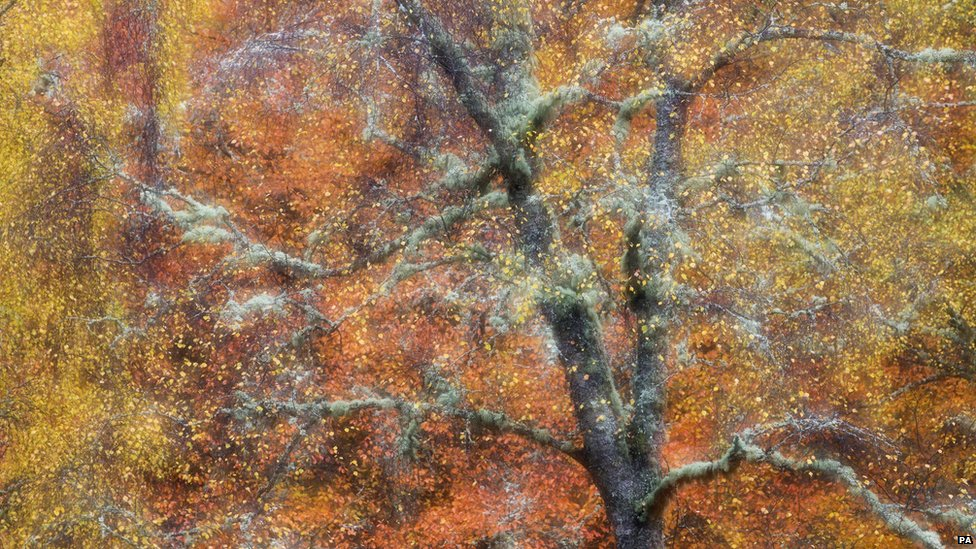 Autumn Jewels, Woodland, Cairngorms by Peter Cairns