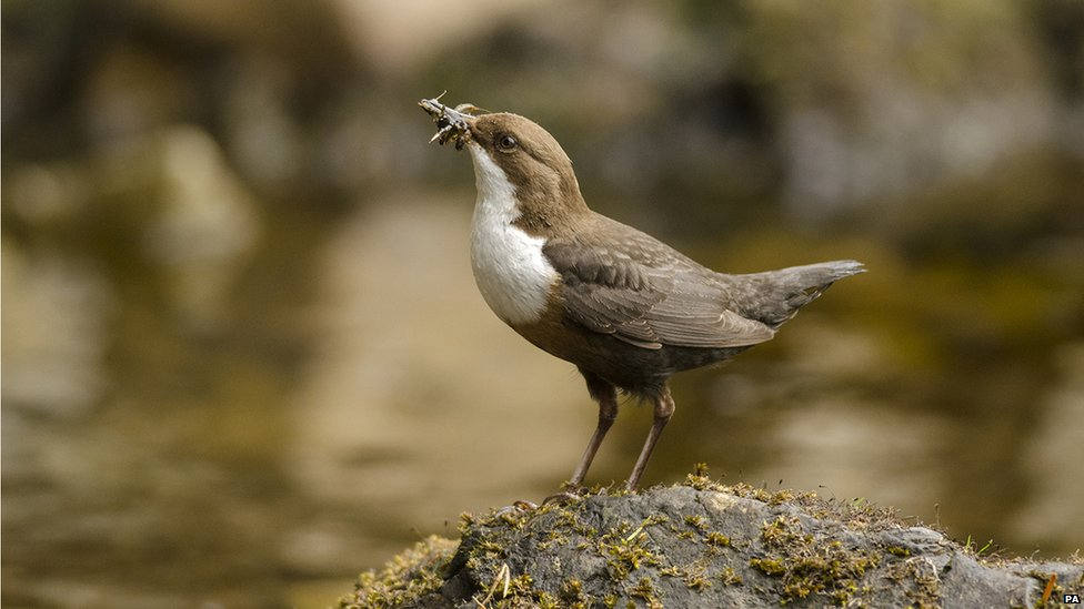 Dipper With Grubs by Wiliam Bowcutt