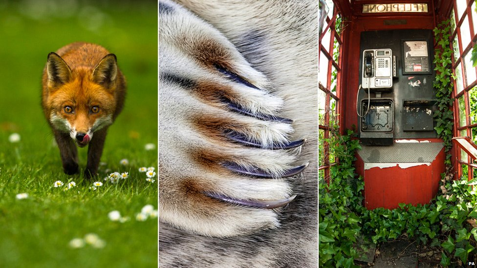 Fox taken by Joshua Burch, grey seal claw taken by Jim Greenfield and telephone box taken by Philip Braude