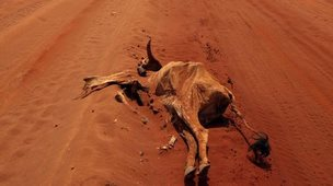 Cattle carcass on road (Image: AP)