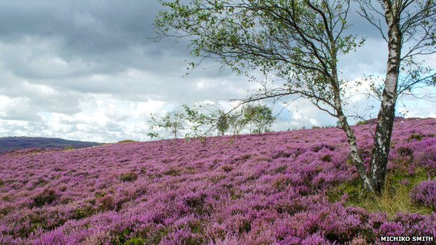 Hathersage heather