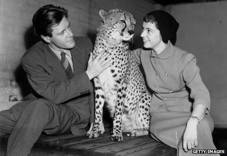 Gerald Durrell and his wife, stroking thirteen year old cheetah 'Prince' at London Zoo, November 2nd 1954