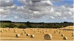 Hay bales in rural crop field near Darlington, County Durham