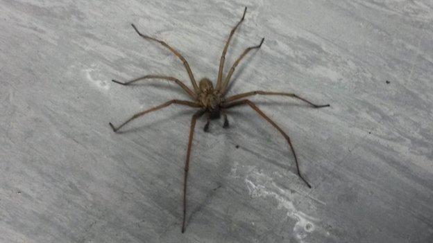 Spider at BBC Radio Derby
