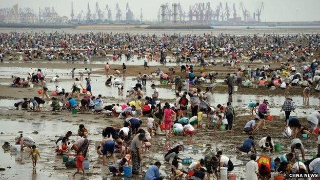 Thousands of people dig for clams on a beach in Shandong, China