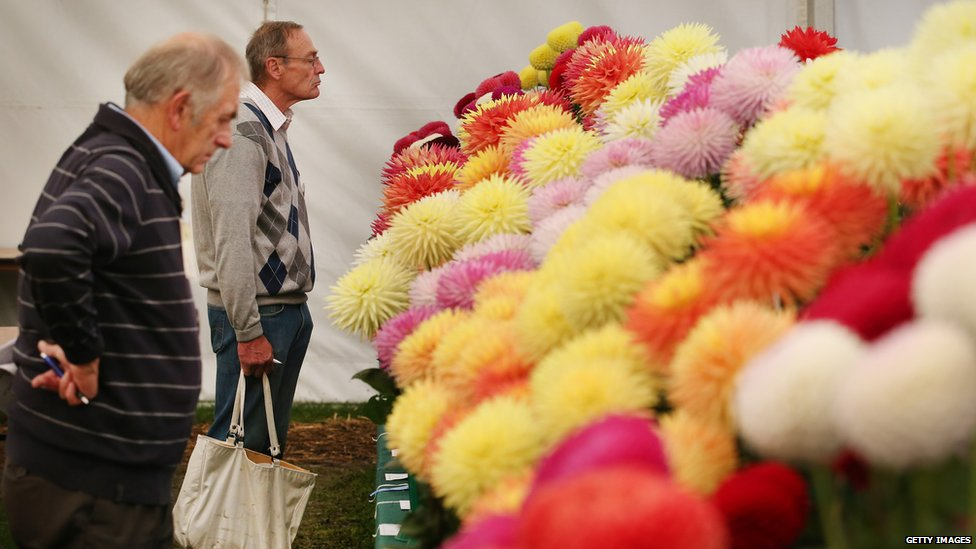 Visitors look at a display of dahlias