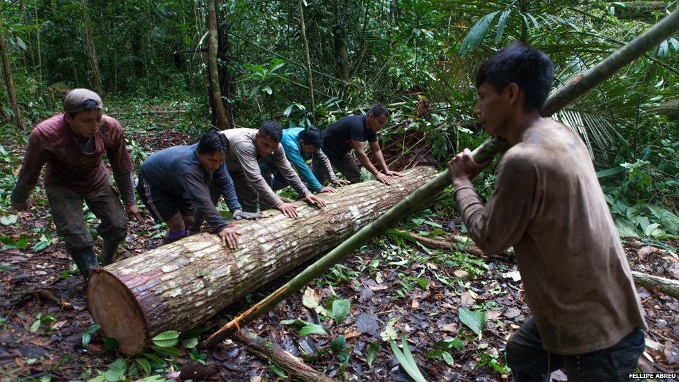 Six men push a log through the Peruvian jungle to the nearest stream on 4 April 2013