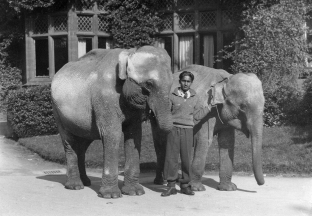During the war, travelling elephants with their mahout, Kay, took refuge at Chester Zoo
