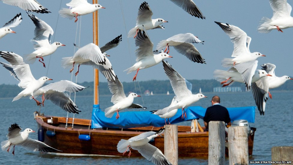 Seagulls take off as a boat passes