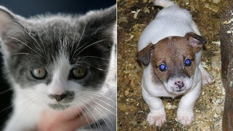 A kitten at a rescue centre in Barnes Hill, and a puppy found at an Irish puppy farm