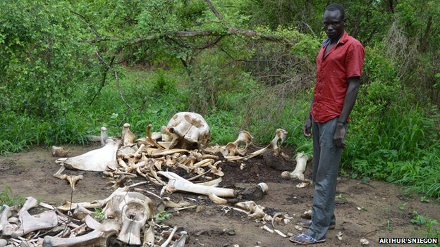 man stands by elephant bones