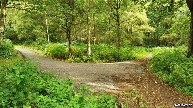 Junction of new trail with Causeway path from Mid-Holmwood Lane