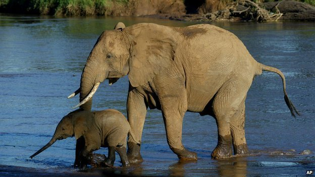 an elephant mother and baby