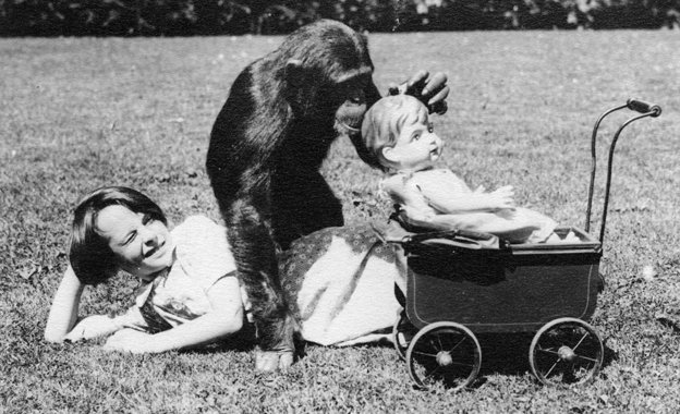 June and chimp playing with doll