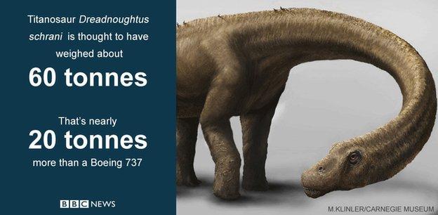 The biggest dinosaur, Dreadnoughtus Schrani