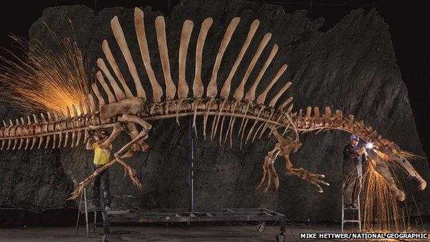 Life-size reconstruction of Spinosaurus