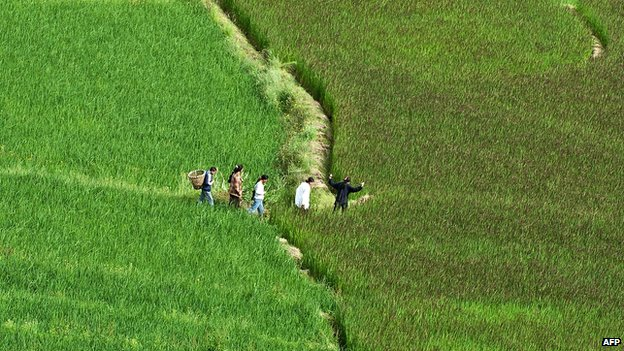 Chinese farmers claim soothing music makes rice fields green