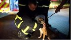 Firefighters rescuing dogs