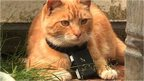 VIDEO: How to build a 'cat camera'