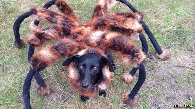 Spider Dog sensation in Poland.