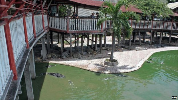 77614436 455514798 - Crocodile suicide in Thailand