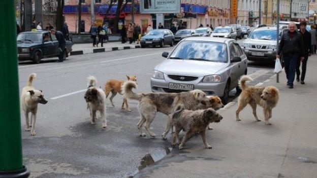 Stray dogs in Sarajevo