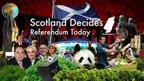 Scotland Decides graphic