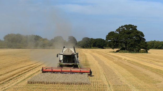 Wheat being harvested near Worcester