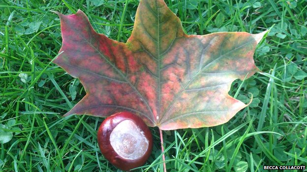 Conker and leaf photo