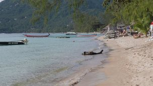 The beach at Koh Tao, Thailand