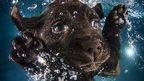 underwater pup