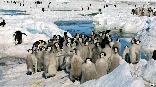 Emperor penguins on the ice in Antartica